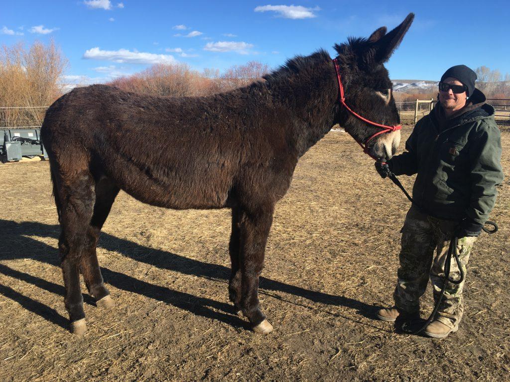 Jennets - West Elk Equine